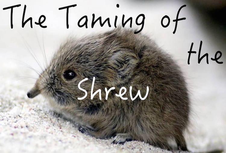 Taming of the Shrew in Dublin