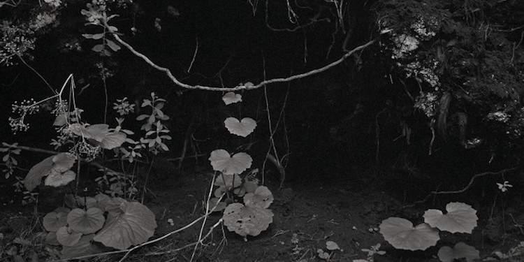 Awoiska van der Molen photography
